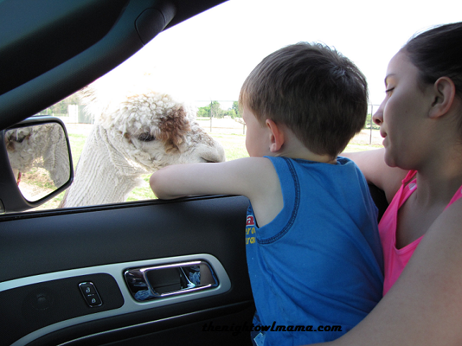 drive-through-petting-zoo