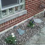 Landscaping with Miracle-Gro Plants Update
