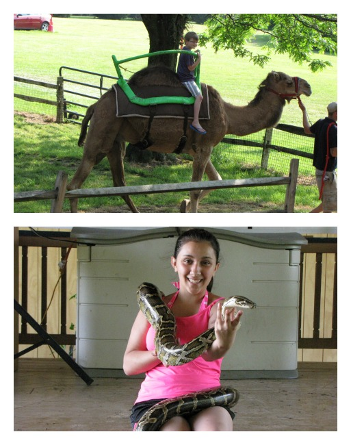riding-a-camel