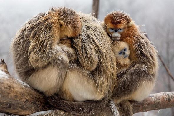BornInChina-monkey